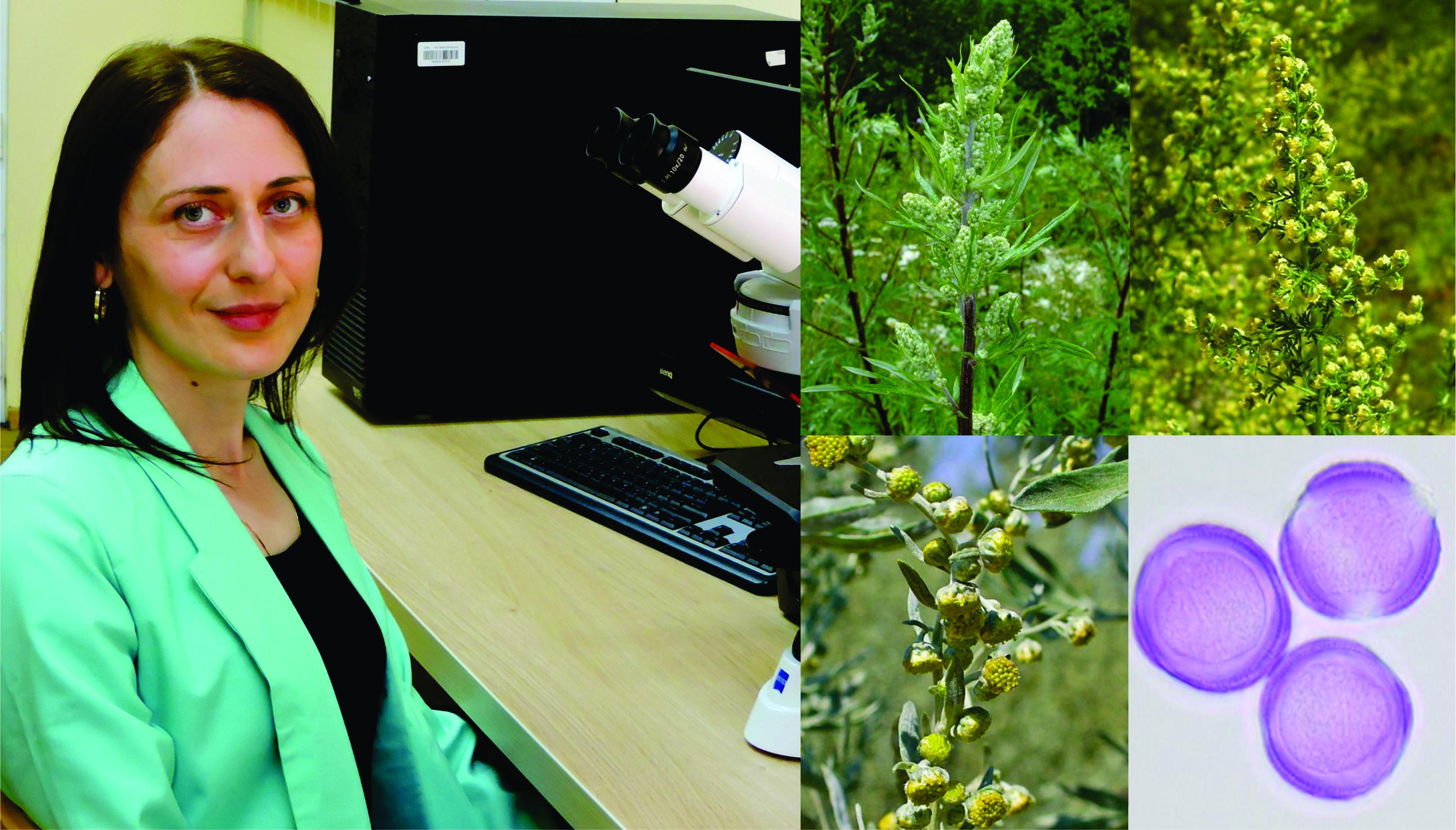 ავშანი - მაღალი ალერგენული თვისებების მქონე მცენარის გვარი