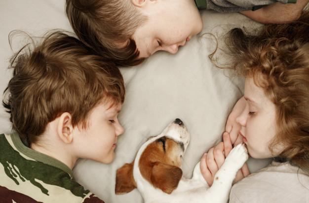 რა რისკი შეიძლება შეუქმნან შინაურმა ცხოველებმა ბავშვს და როგორ ავიცილოთ თავიდან დაავადებები?